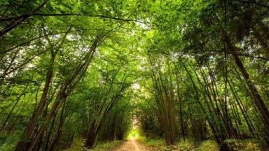 Opi ottamaan etäisyyttä stressaaviin ajatuksiin – lyhyt hengitysharjoitus